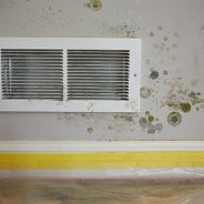 Reasons to Avoid DIY Mold Removal
