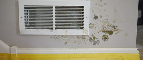Dealing with Mold in Basement – FAQ