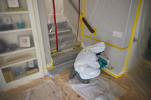 ServiceMaster Mold Remediation