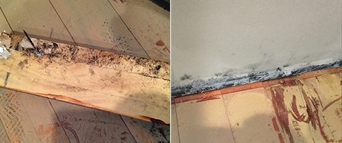 How to Prevent and React to Mold After Water Damage