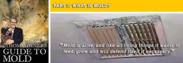 The 2016 Homeowners Guide to Mold - Part 1