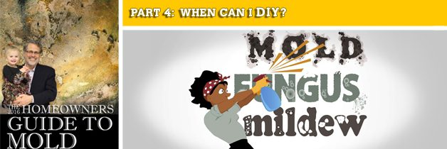 Mold Removal: WHEN CAN I DIY?