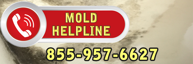MOLD HELPLINE for Construction Companies