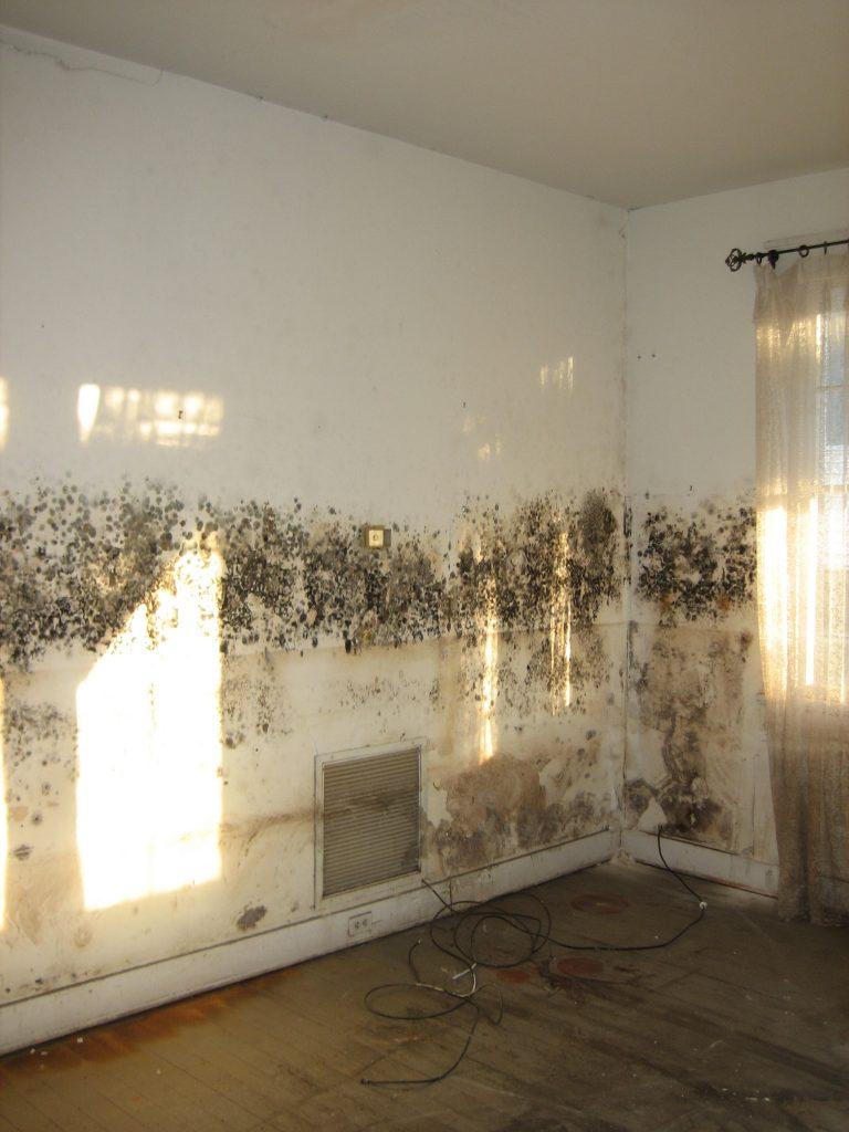 Moldy Living room