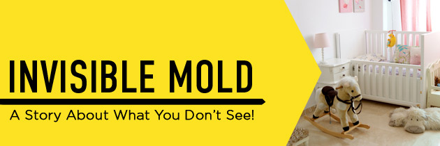 Invisible Mold – Case Study