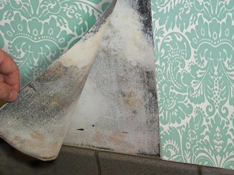 mold in wallpaper