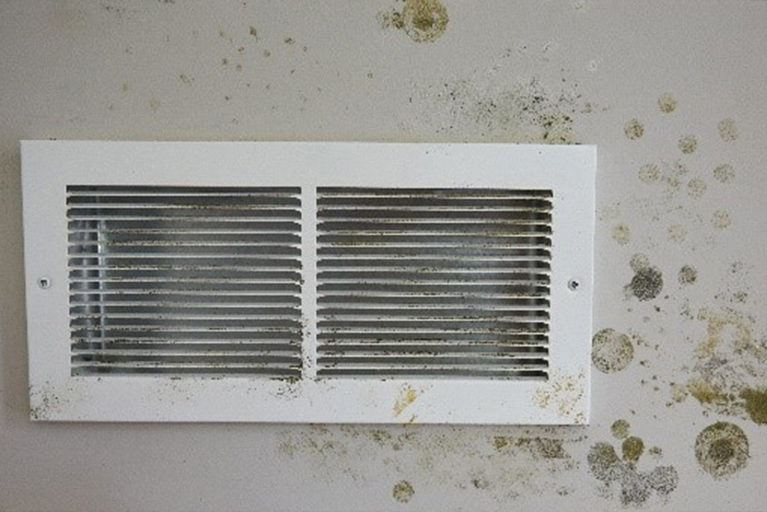 Mold remediation problem