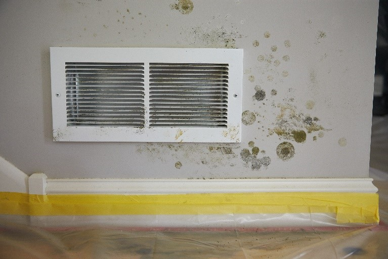 Mold remediation problem