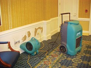 ServiceMaster Mold Remediation and Removal