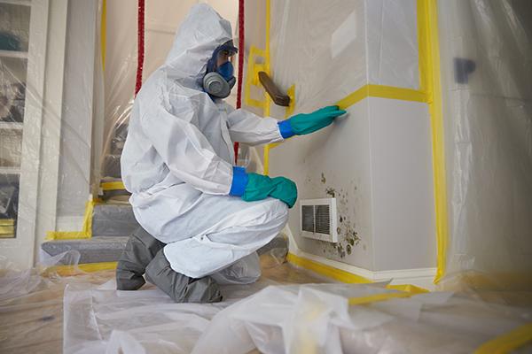 Mold Remediation Services - Fairfax, VA