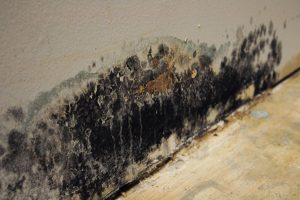 Trifect Mold Removal and InstaScope Testing